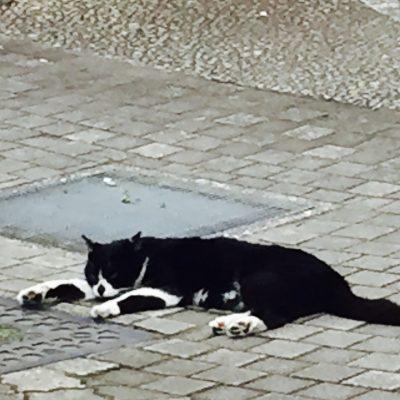パンダ🐼猫