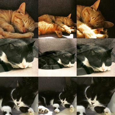 ベランダに来た猫🐱達